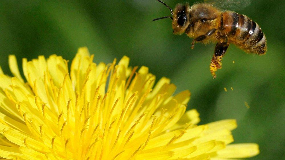 Trois substances attaquant le système nerveux des insectes seront prohibées en plein champ dès 2019.