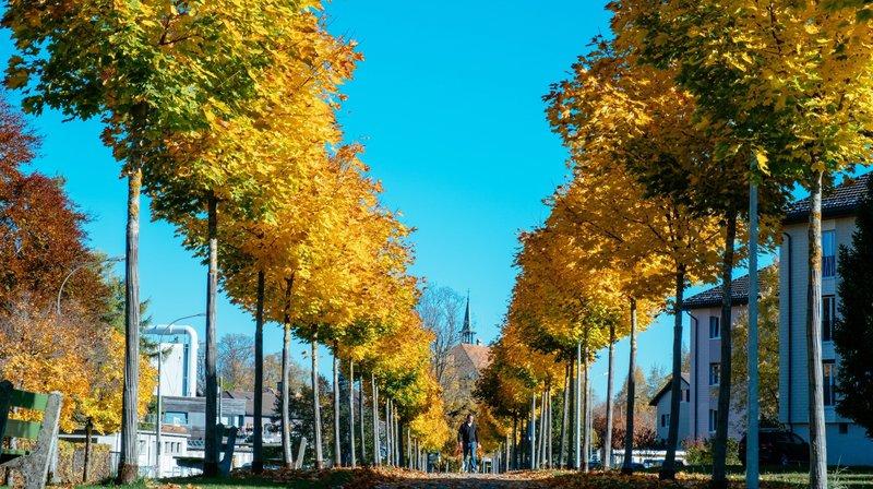 Dans le canton de Neuchâtel, les communes règlent la politique d'abattage des arbres sur les domaines privé et public.