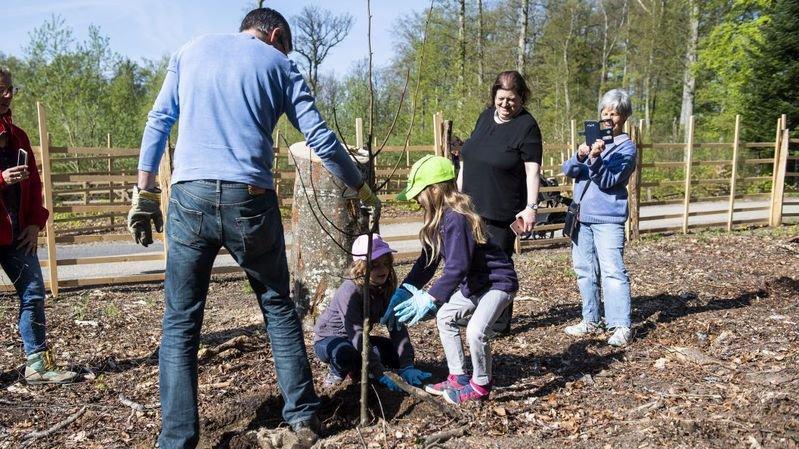 Des tilleuls plantés par des habitants de Peseux