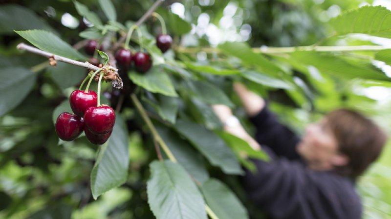Les exploitations agricoles biologiques ont le vent en poupe
