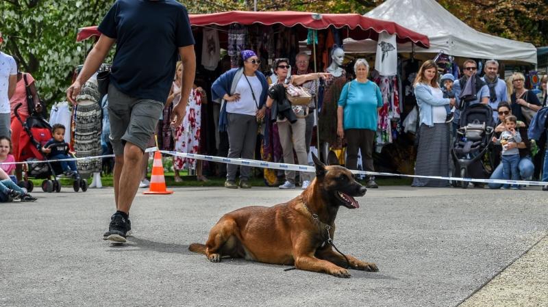 Neuchâtel: biscuits et dressage de chiens sous les arbres