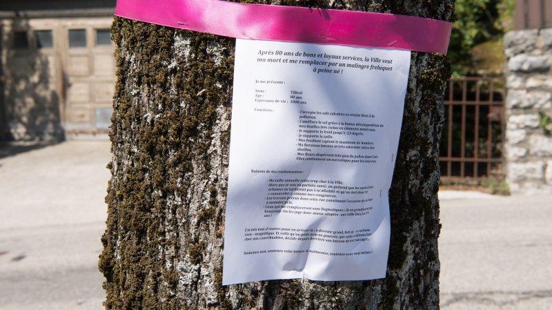 Des abattages d'arbres émeuvent sur le Littoral