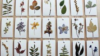 Un château jonché de belles  plantes nées autrefois