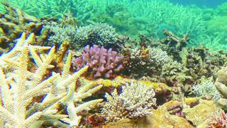 Hécatombe des coraux