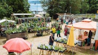 Les rives du lac de Neuchâtel dégagent une douce odeur de «flower power»