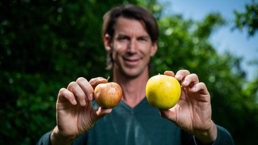 Fondateur d'Uglyfruits, Michaël Dusong présente deux pommes bio. On trouvera celle de droite dans le commerce. Celle de gauche,  en revanche, parce que trop petite, risque d'être jetée.