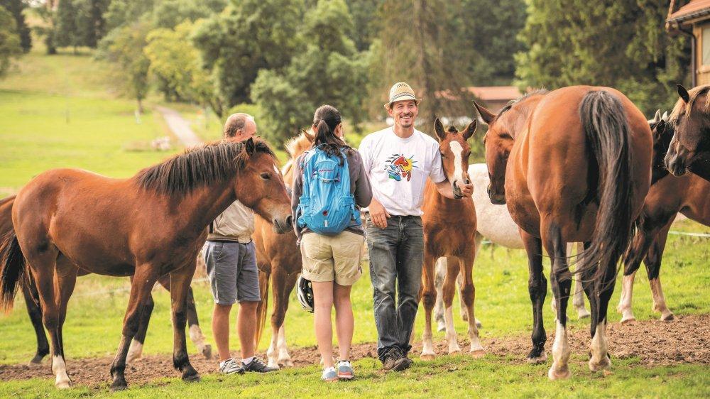 Dans les coulisses du métier d'éleveurde chevaux