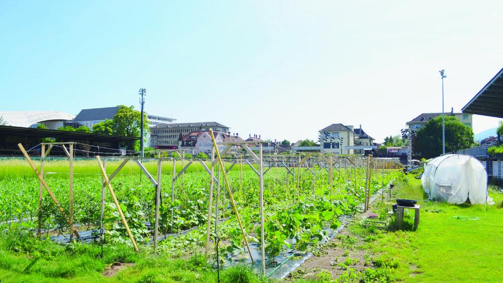 Un jardin potager dans un ancien stade de football? A Bienne, c'est devenu possible.