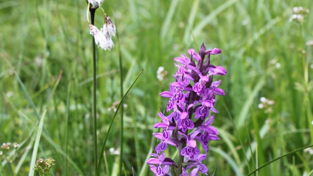 A la découverte  de l'orchidée sauvage des Pontins