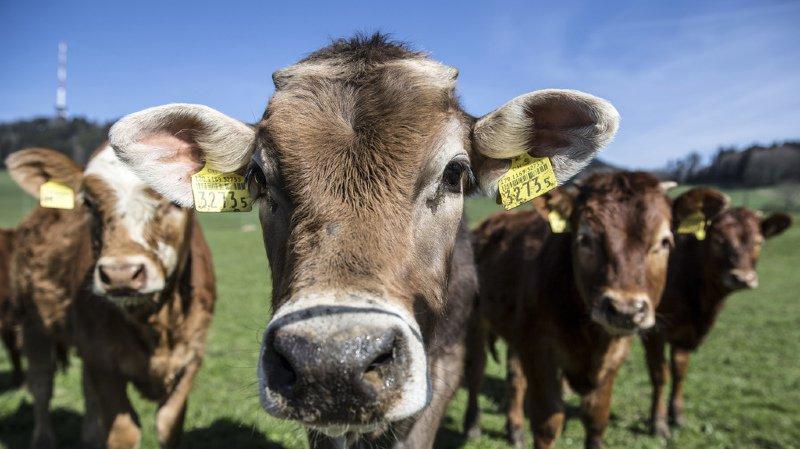 Cette baisse s'explique essentiellement par la réduction des ventes de médicaments vétérinaires administrés avec les aliments afin de traiter des troupeaux entiers d'animaux de rente. (illustration)