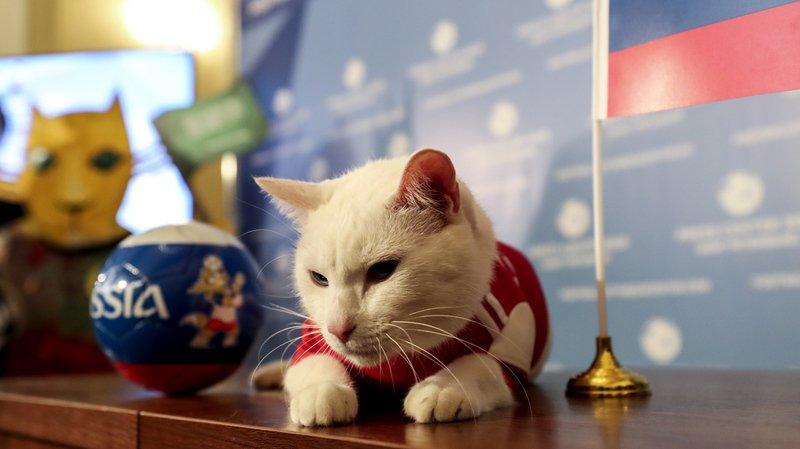 Achille a délivré mercredi son premier diagnostic, en faveur de la Russie.