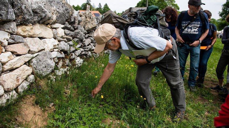 A la Montagne de Cernier, une balade conduite par un botaniste permettait de découvrir la flore des pâturages boisés.