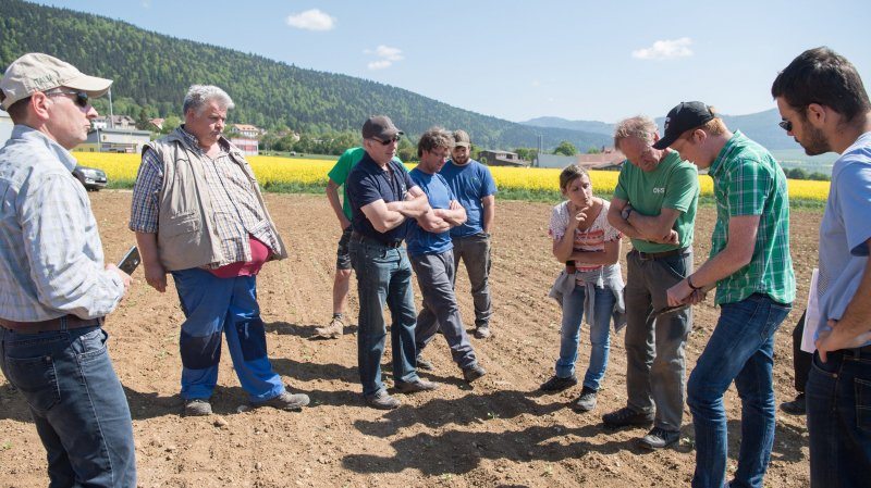 Les betteraves sucrières ont la cote au Val-de-Ruz