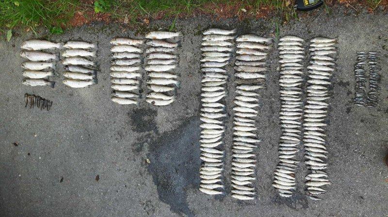 Une pollution au purin tue 12 kilos de poissons à Sâles (FR)