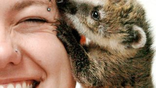 Animaux de compagnie: du chat au coati, un million d'amis enregistrés