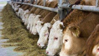 Manifestation contre la méga-halle d'engraissement de taureaux de Coffrane