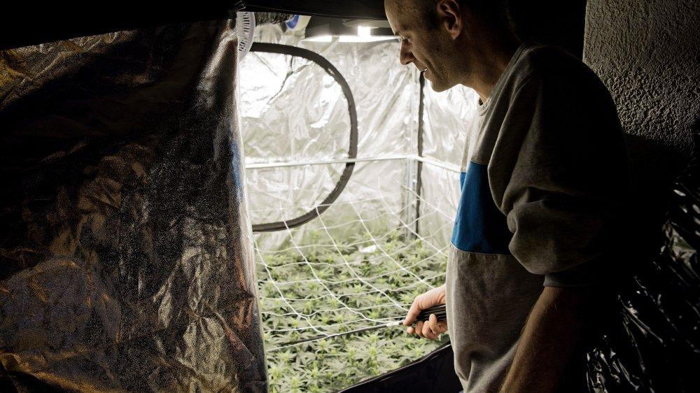 La majorité des cultures de cannabis légal, en Suisse, se font à l'intérieur, comme ici, lors d'un reportage à la Chaux-de-Fonds en septembre dernier.