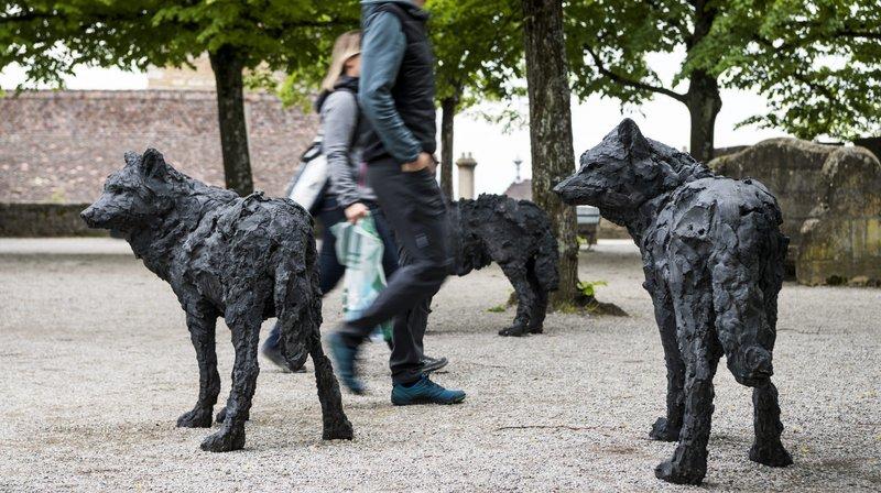 Une meute de loups a investi  l'esplanade de la Collégiale