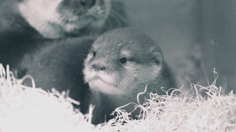Loutron du Bois du Petit-Château: le zoo lance un concours photos