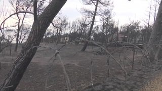Athènes: des centaines de voitures et des dizaines de maisons brûlées