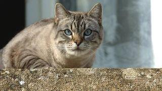 Inquiétantes disparitions de chats dans le Jura