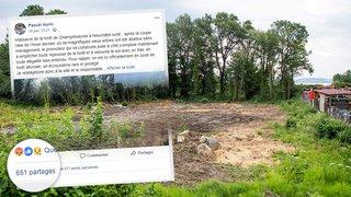 Une simple coupe d'arbres à Champréveyres dégénère sur Facebook