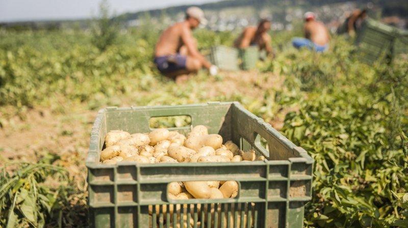Le 23 septembre, le peuple suisse se prononce sur deux initiatives en rapport avec l'agriculture.