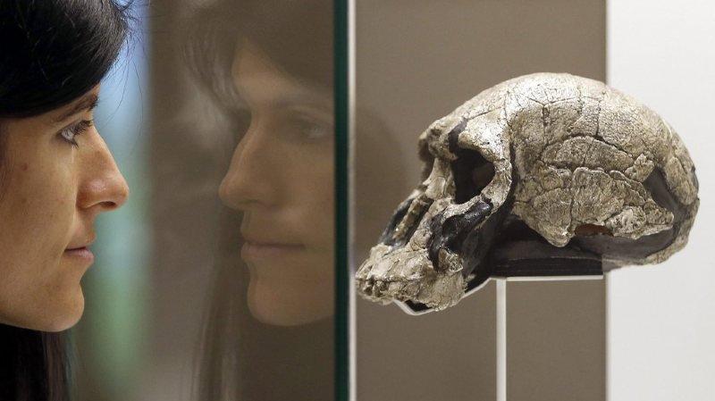 Paléontologie: un fossile prouve l'accouplement entre deux espèces humaines
