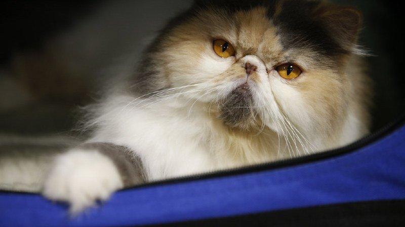 Les croquettes pour chats contiennent des éléments toxiques pour vos félins. (illustration)