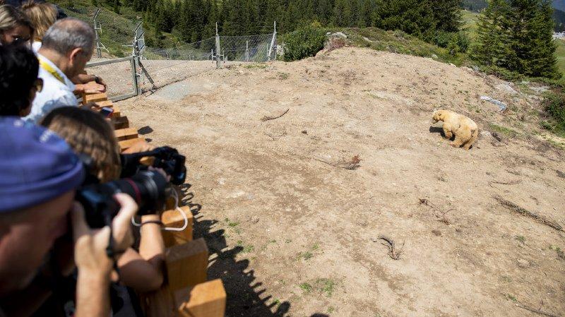 """Grisons: """"Bärenland"""", le premier centre de protection des ours de Suisse, a été inauguré"""