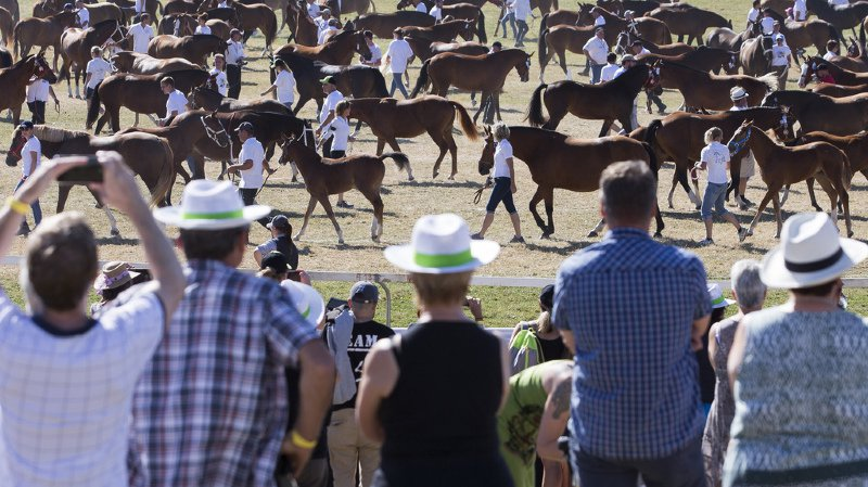 Jura: quelque 55 000 personnes ont participé au Marché-Concours à Saignelégier