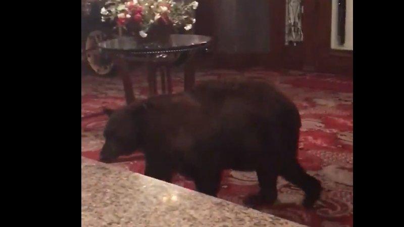 Etats-Unis: un ours se balade dans l'hôtel de Shining, dans le Colorado