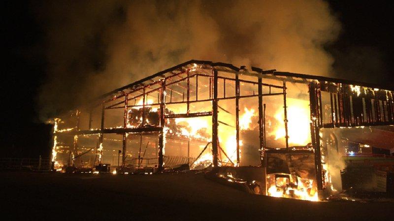 Fribourg: une soixantaine de vaches périssent dans un incendie à Montévraz