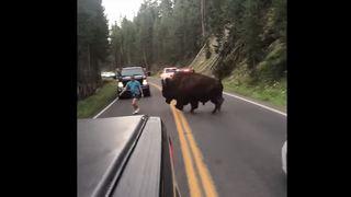 États-Unis: un homme imprudent provoque un bison sur une route à Yellowstone