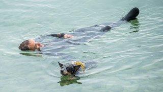 Sur les Jeunes-Rives, à Neuchâtel, une poignée de chiens sont venus montrer leurs talents sur terre et dans l'eau