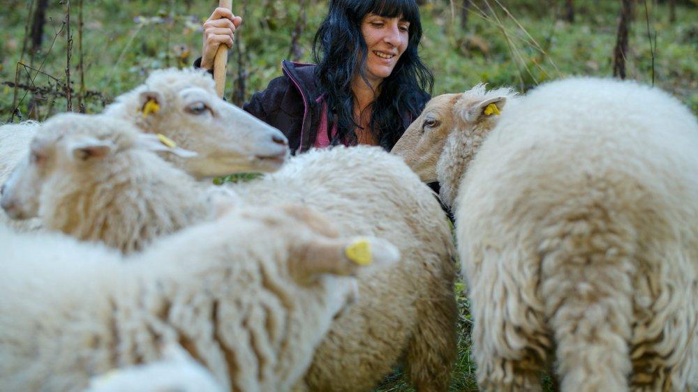 Chaque jour, Carla Garcia rend visite à ses moutons, qui pâturent à Pertuis, sur les hauts de Chézard, depuis jeudi dernier.