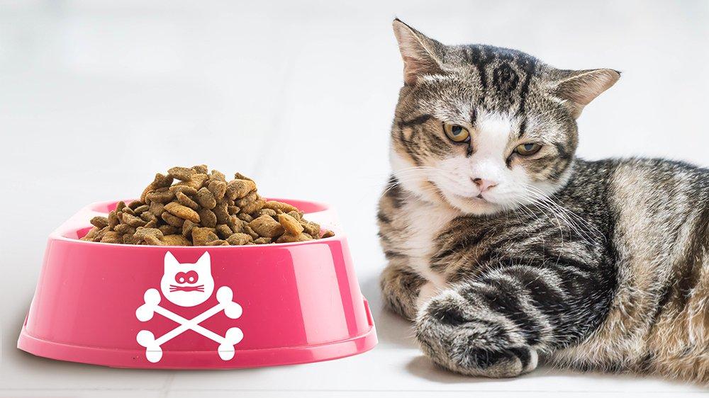 Gamelle des chats remplie de poison?