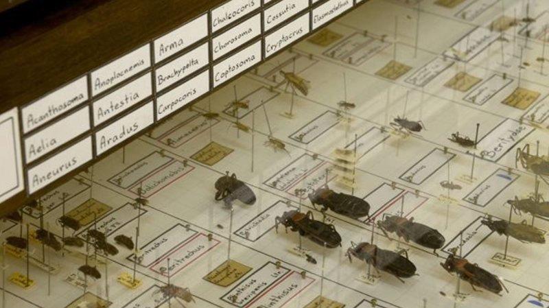 Des milliers d'insectes ont dû être déplacés cette nuit.