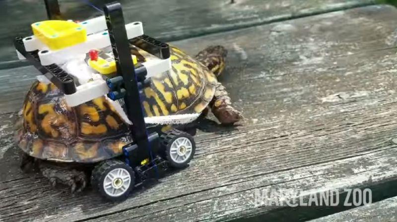 Des Lego pour aider une tortue blessée