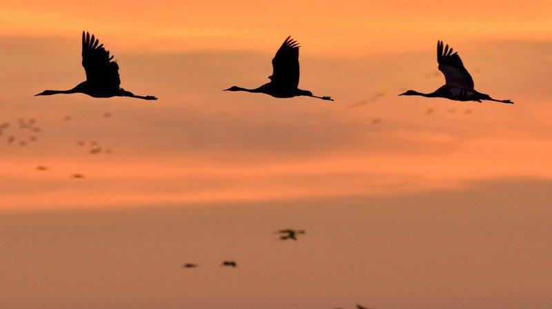 60 évènements organisés en Suisse ce week-end en l'honneur des oiseaux migrateurs