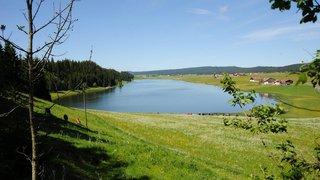 Pas de danger: les algues du lac des Taillères ne sont pas toxiques