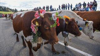La vache, ce monde pour la désalpe du Boéchet!