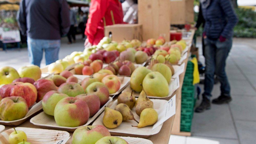Près de 200 variétés de pommesà déguster et quelque 100 arbres à acheter