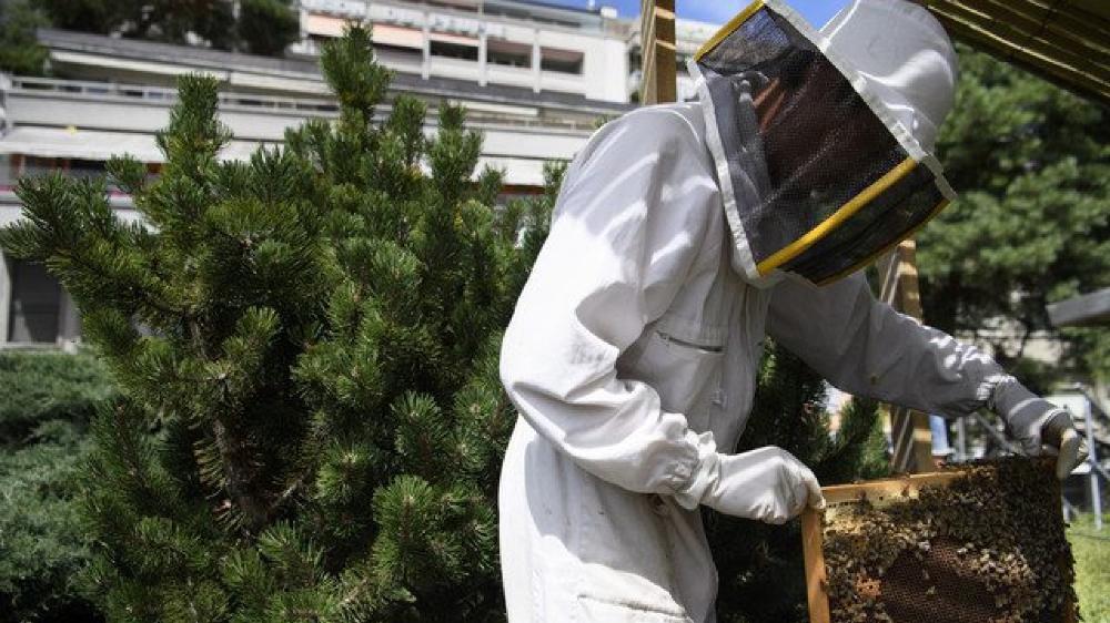 Les apiculteurs s'aperçoivent souvent trop tard que leurs abeilles sont malades.