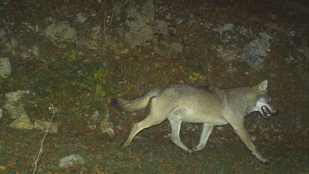 Le cliché a été pris le 14 octobre à 5h23 par la Fédération départementale des chasseurs du Jura, en France.