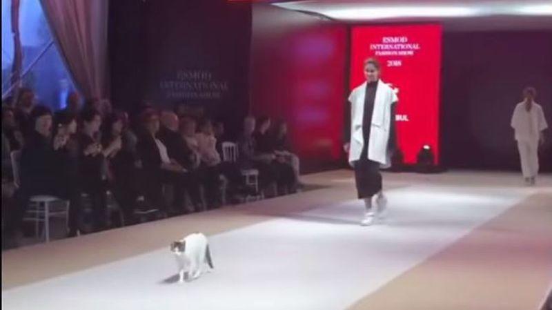 Un chat s'invite dans un défilé de mode et vole la vedette aux mannequins