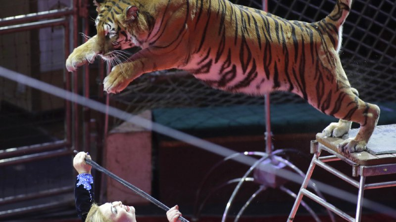 Portugal: les animaux sauvages seront interdits dans les cirques