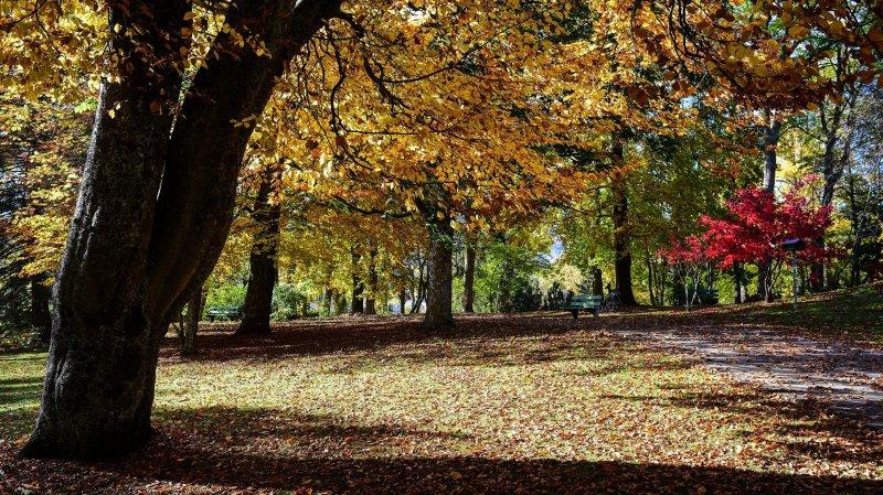 Les forêts, un espace à préserver pour sa biodiversité.