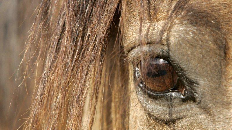 Un cheval meurt, shooté par une voiture à Saint-Blaise