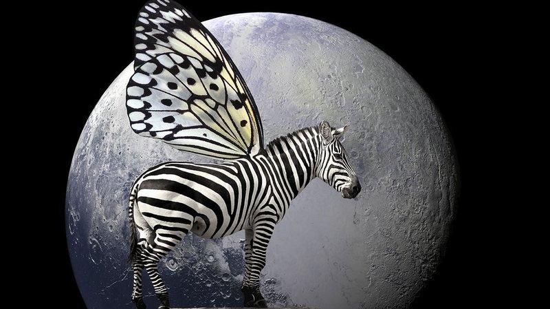 Les petites bêtes de Peter Wallimann irradient de lumière au Papiliorama de Chiètres